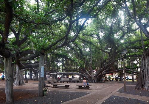 Story of the Banyan Tree
