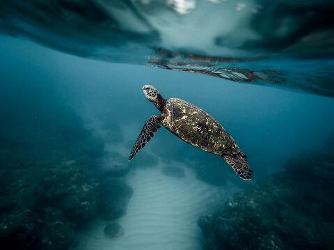 Sea Turtle Safety