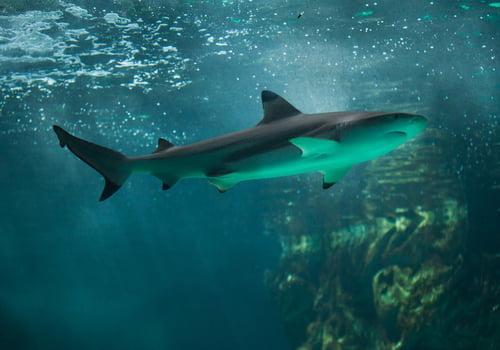 Beach: Sharks