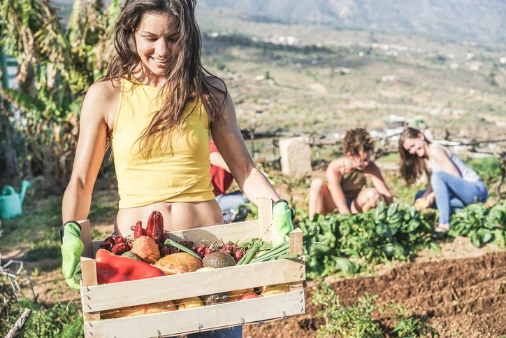 planning a trip to Hawaii food tours harvesting
