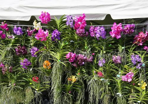 Orchid Alley