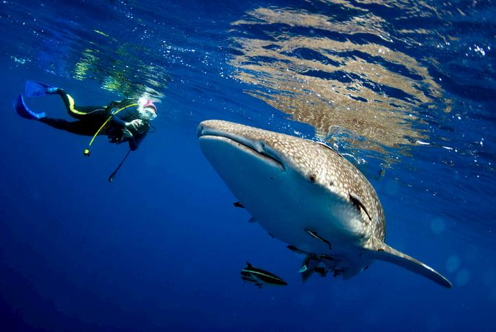 Sharks, Swimming And Hawaii