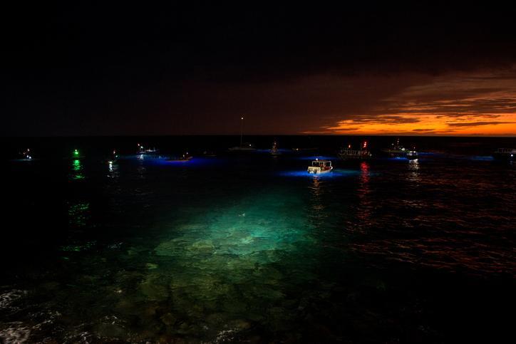 Night Snorkeling